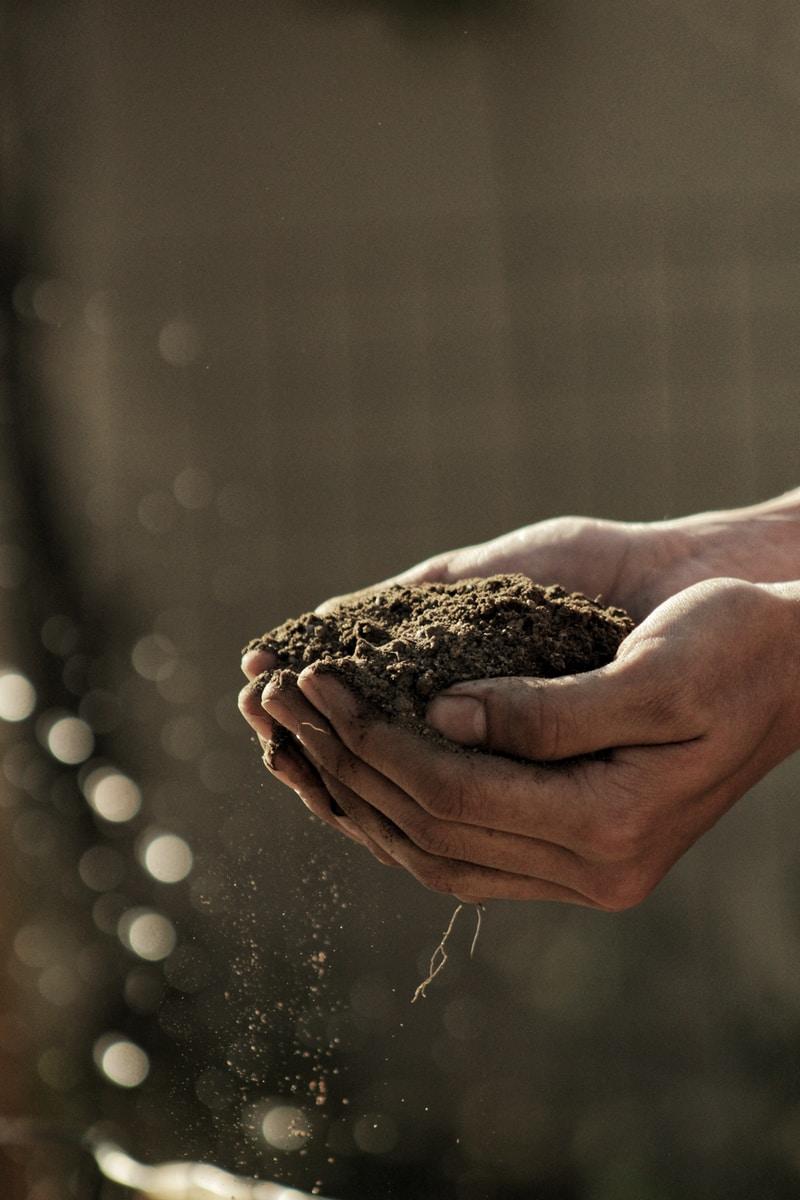 4 raisons pour lesquelles l'agroécologie est indispensable à l'équilibre planétaire